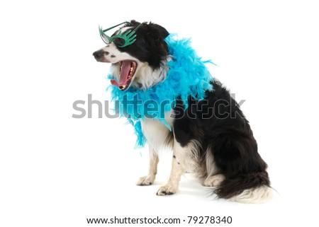 Funny dog with boa and disco glasses