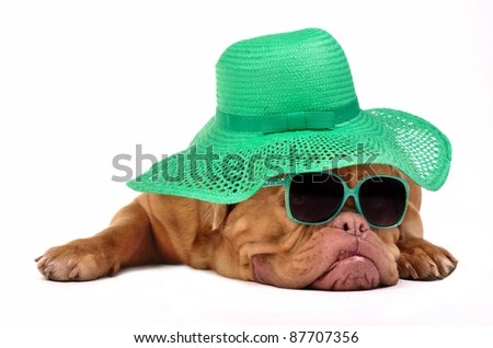 Funny dog with hat and glasses, isolated on white background