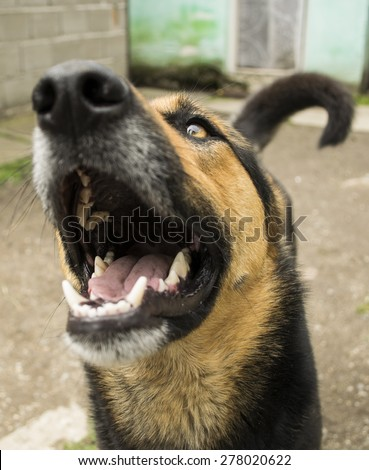 Funny dog with open mouth close up nose and cute tale
