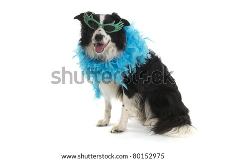 Funny dog with sunglasses and blue feather boa