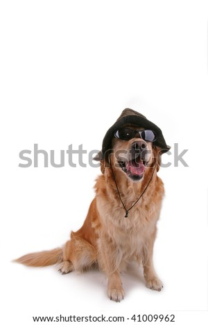funny dog with sunglasses and hat