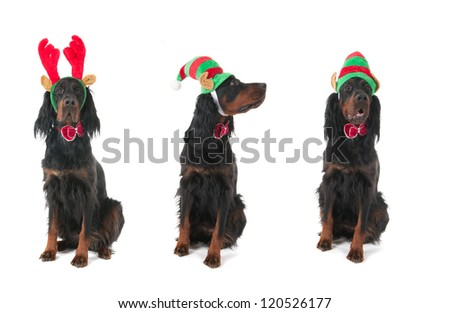 Funny dogs dressed for Christmas