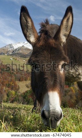 Funny donkey in autumn