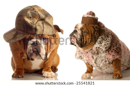 funny elderly looking dog couple dressed in farmers hat and old ladies fur coat and hat