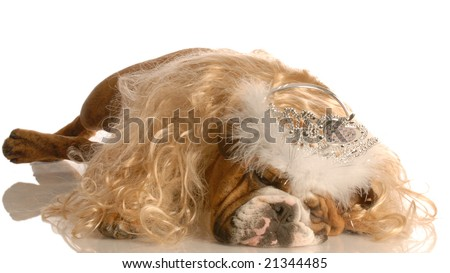 funny english bulldog dressed up as a princess with blond wig and tiara