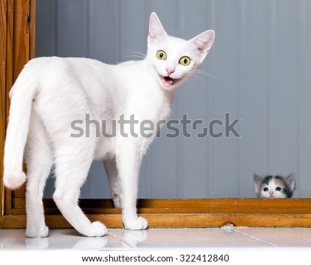 Funny evil white cat with open mouth. Funny Crazy Cat