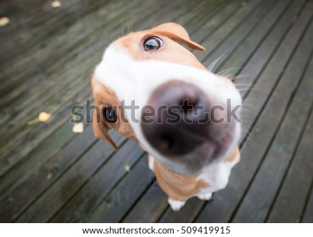 Funny Extreme Close Up Small Puppy #509419915
