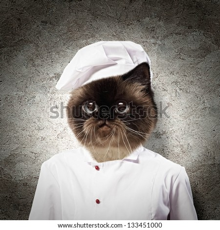 Funny Fluffy Cat Cook Robe Collage Stock Photo