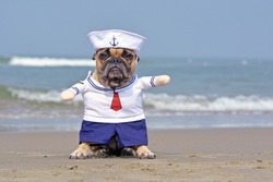 Funny French Bulldog dressed up with a cute sailor dog Halloween costume on beach with ocean in background