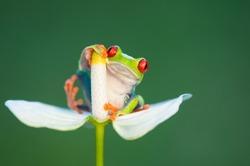 Funny frog on flower