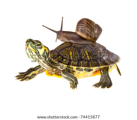 Funny garden snail taking a lift on a turtle's back