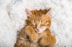 Funny ginger cat sleeping at home. Red kitten covered with blanket. Top view of red cat on sleep time
