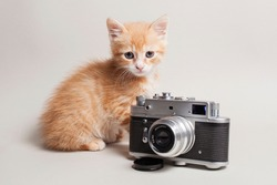 Funny ginger kitten and a vintage camera on a light background