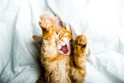 Funny ginger kitten yawns and opens mouth. Funny cat sleeping in white bed. Lazy awaking