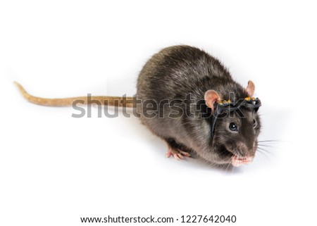 funny gray rat in small glasses #1227642040