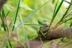 Funny green frog on soft background