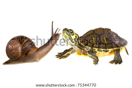 Funny green turtle falling in love with a garden snail
