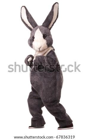 Funny grey rabbit isolated on white background