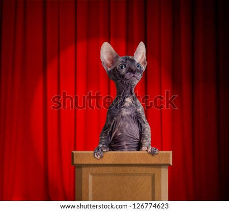 Funny hairless cat standing on a rostrum for a speech with red curtains and light spot behind