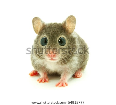 funny hamster pictures. stock photo : funny hamster