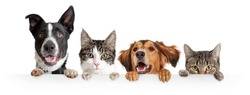 Funny happy dogs and cats peeking over blank white web banner or social media cover with paws hanging over