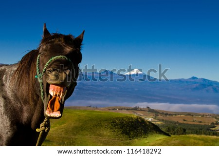 funny horse with a silly expression on it's face and mountains