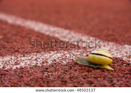Funny image of snail running on course lane