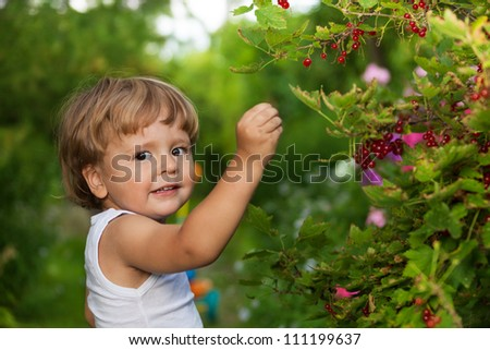 funny kid picking up red currants from currant bush and looking at camera