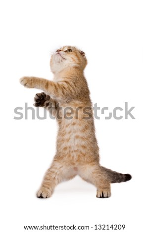 funny kitten pictures. stock photo : funny kitten