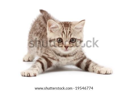Funny kitten #19546774