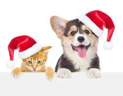 Funny kitten and corgi puppy in red christmas hats peeking over empty white board. isolated on white background. Space for text