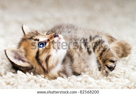 Funny kitten in carpet