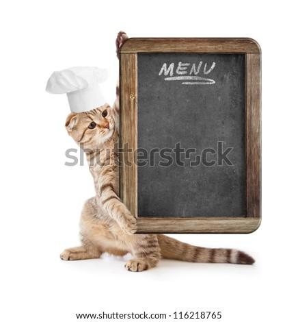 funny kitten in cook hat holding menu blackboard - stock photo