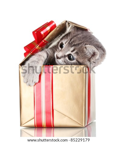 Funny kitten in golden gift box isolated on white