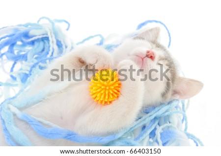 funny kitten sleeping