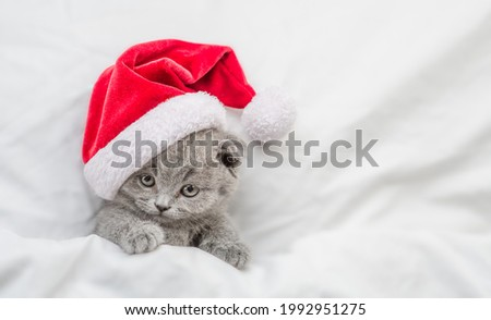 Funny kitten wearing red santa's hat sleeps under a white blanket on a bed. Top down view. Empty space for text