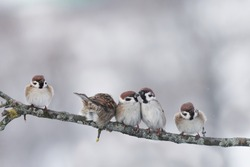 funny little birds sitting on a branch cold winter in the Park