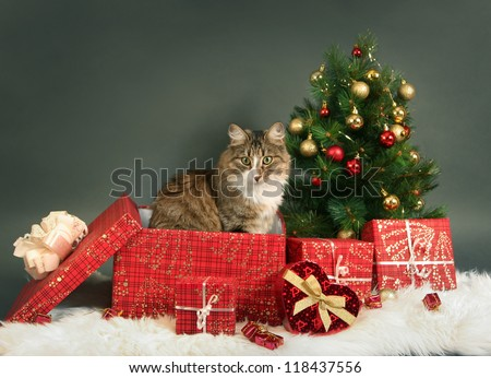 funny little cat and christmas tree