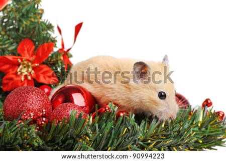 Funny little hamster in branch of fir - stock photo