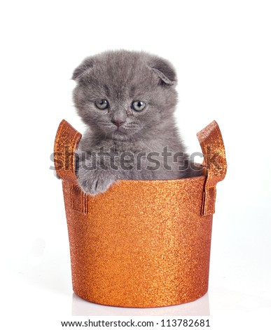 funny little kitten in shiny basket isolated on white