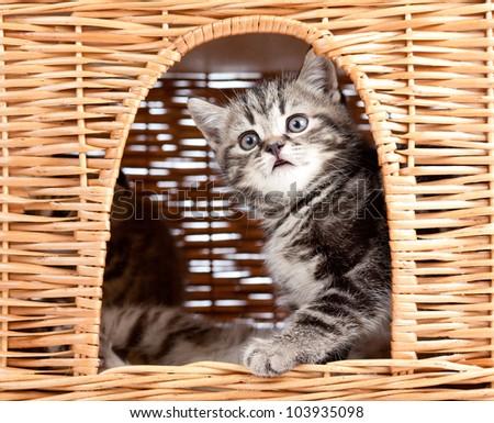 funny little kitten sitting inside wicker cat house - stock photo