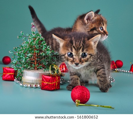 Funny little kittens with handmade Christmas tree and balls . Studio shot.