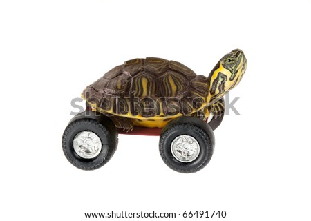 Funny little turtle using four wheels to gain speed