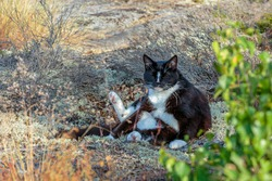 Funny looking black and white cat sitting in the bushes