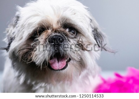 Funny looking cute puppy dog eyes in silly portrait picture