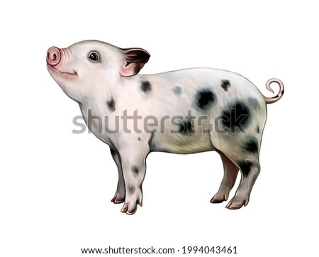 funny mini pig (teacup pig, pygmy pig), realistic drawing, pet book illustration, isolated image on white background