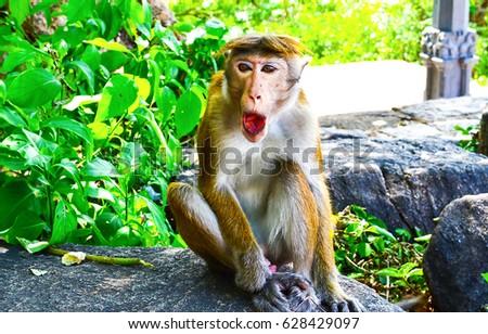 Funny monkey #628429097