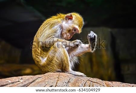 Funny monkey #634104929