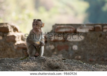 funny monkey pictures. stock photo : funny monkey