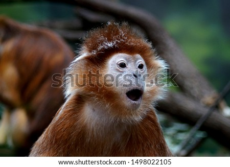 Funny monkey with funny face